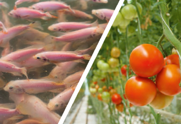 Decoupled Aquaponics
