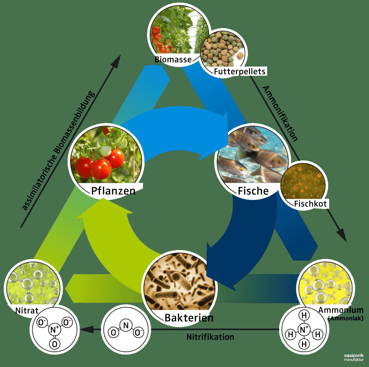 Der natürliche Aquaponik Nährstoff-Kreislauf